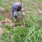 herbicidas autorizados